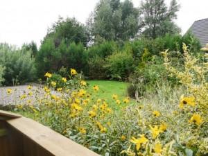Ferienhaus Nordstern Garten